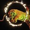 Цирки в Миассе
